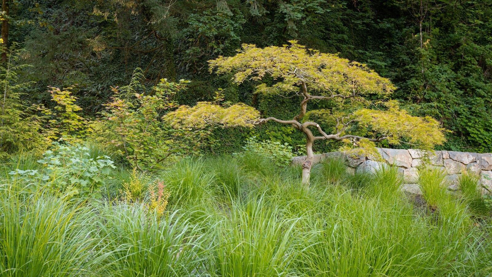 Jardín Japonés de Portland que incluye un jardín