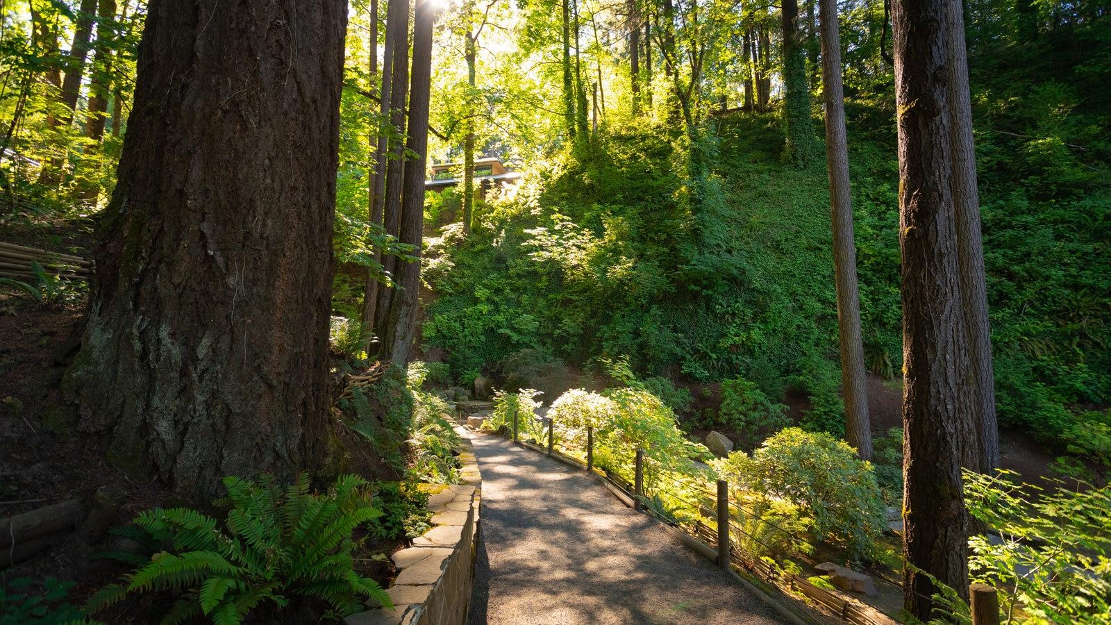 Jardín Japonés de Portland mostrando escenas forestales y un jardín