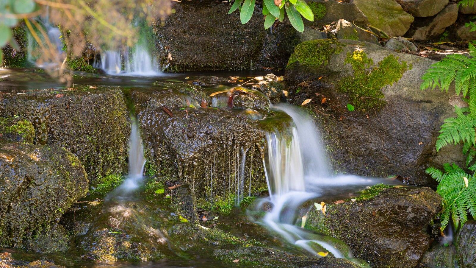 Crystal Springs Rhododendron Garden mostrando um rio ou córrego
