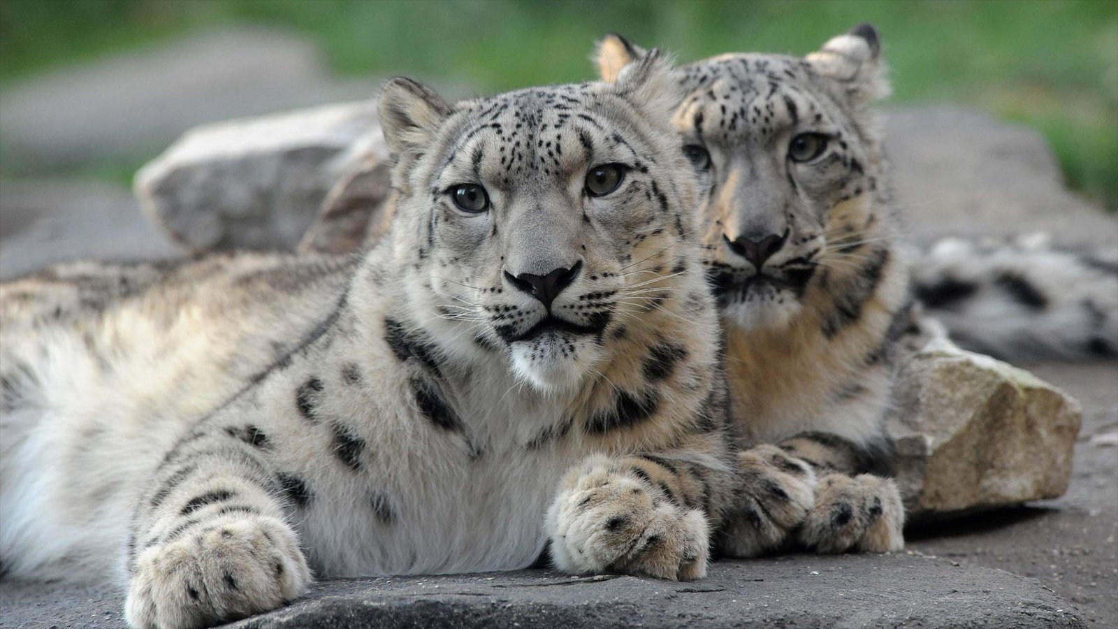 Brookfield Zoo showing zoo animals and dangerous animals