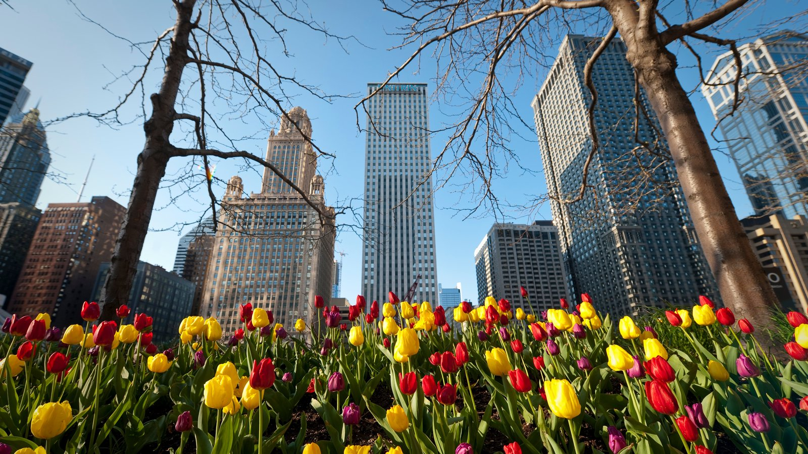 Chicago which includes modern architecture, flowers and a high rise building