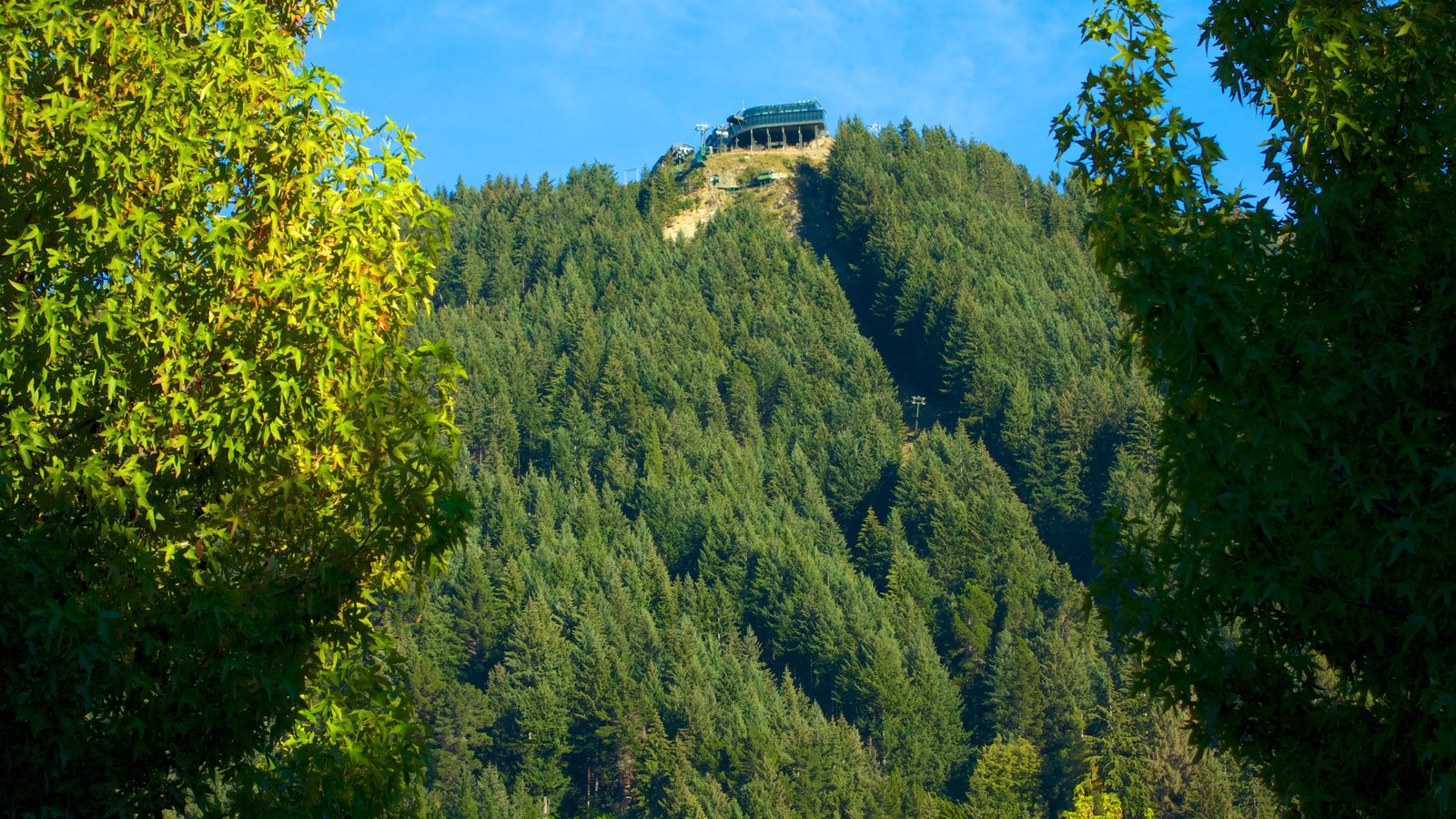 Bob\'s Peak showing landscape views and forests