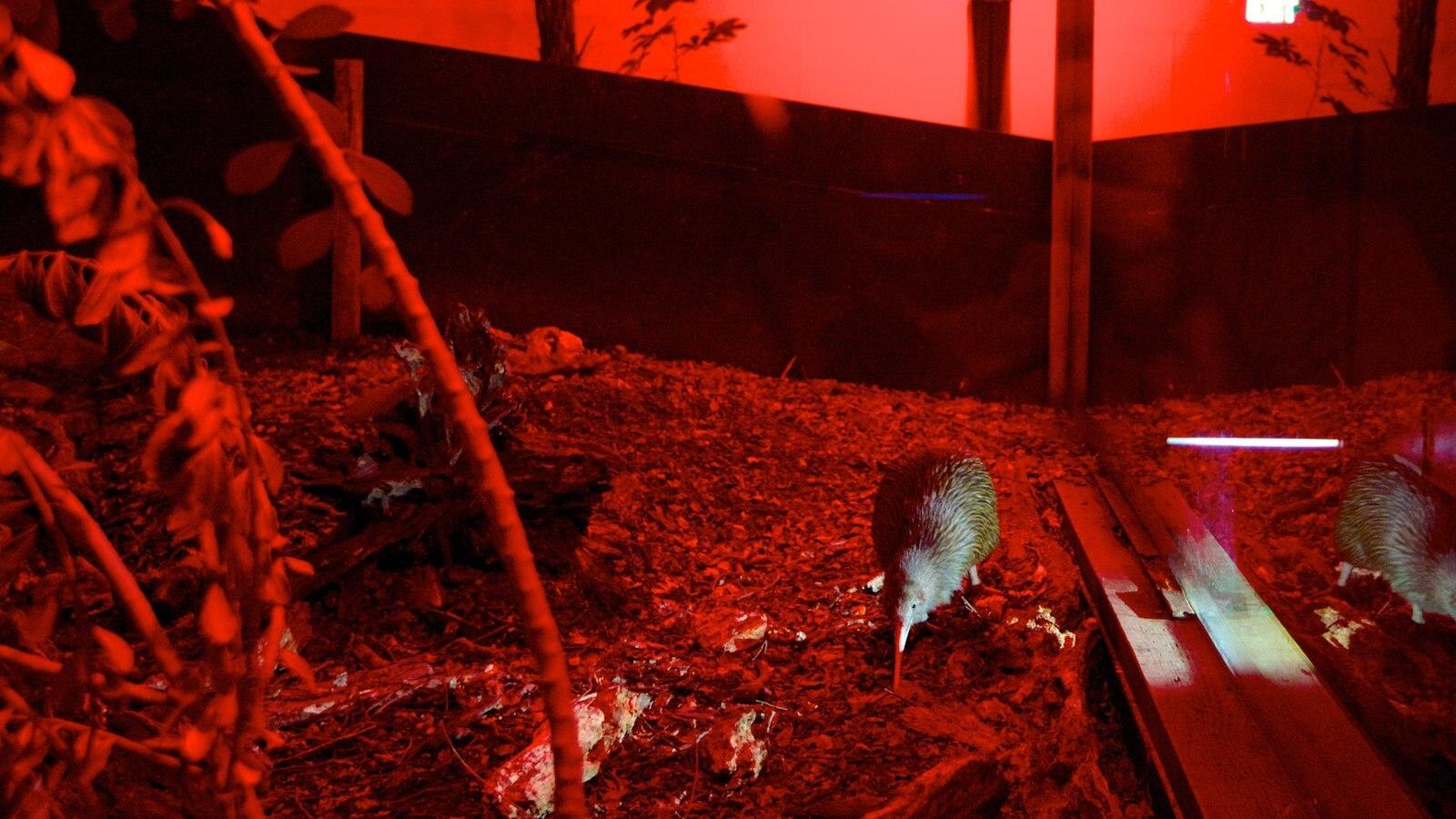Kiwi and Birdlife Park showing zoo animals, bird life and interior views
