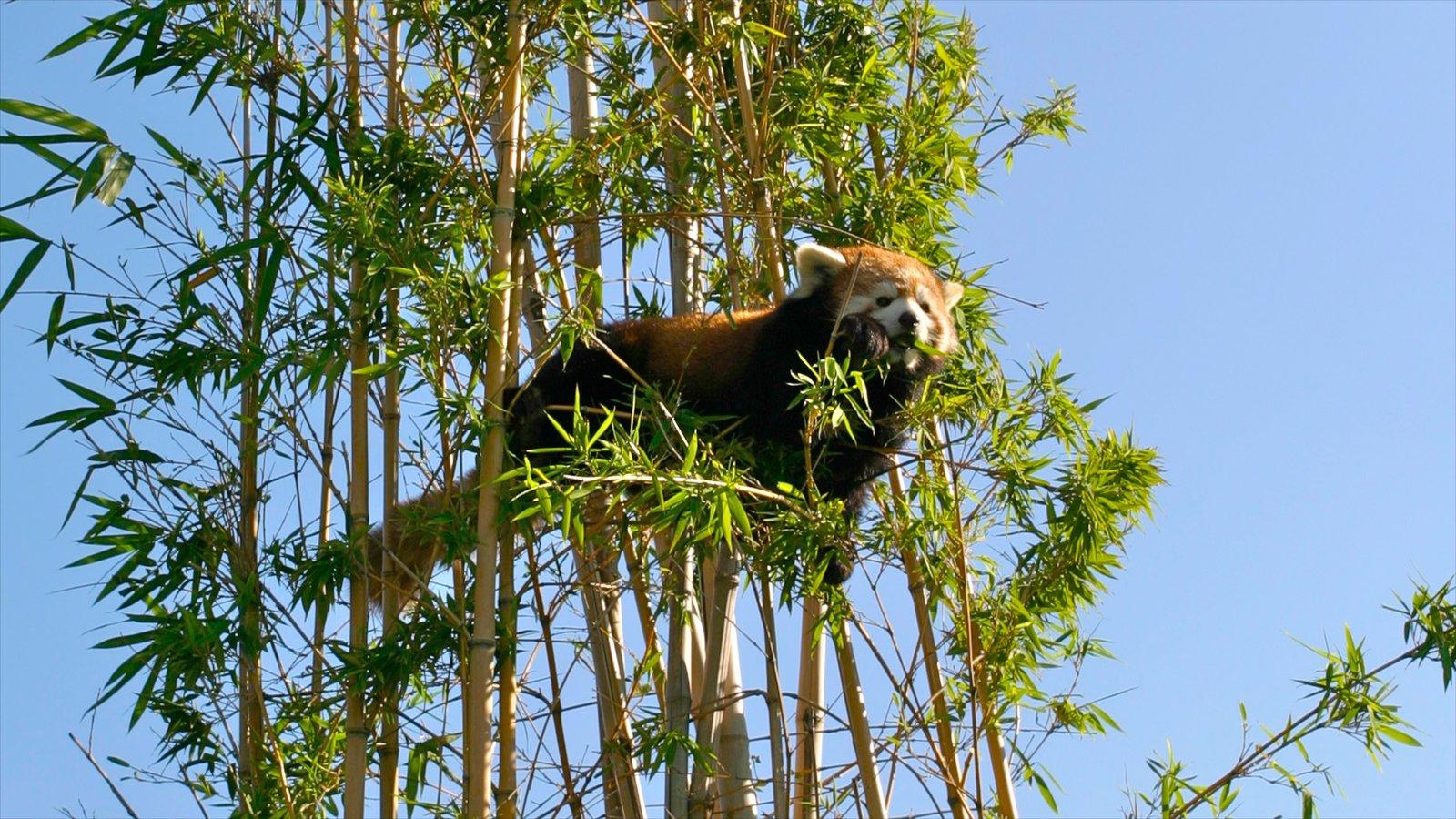 Zoo de Buenos Aires caracterizando animais de zoológico
