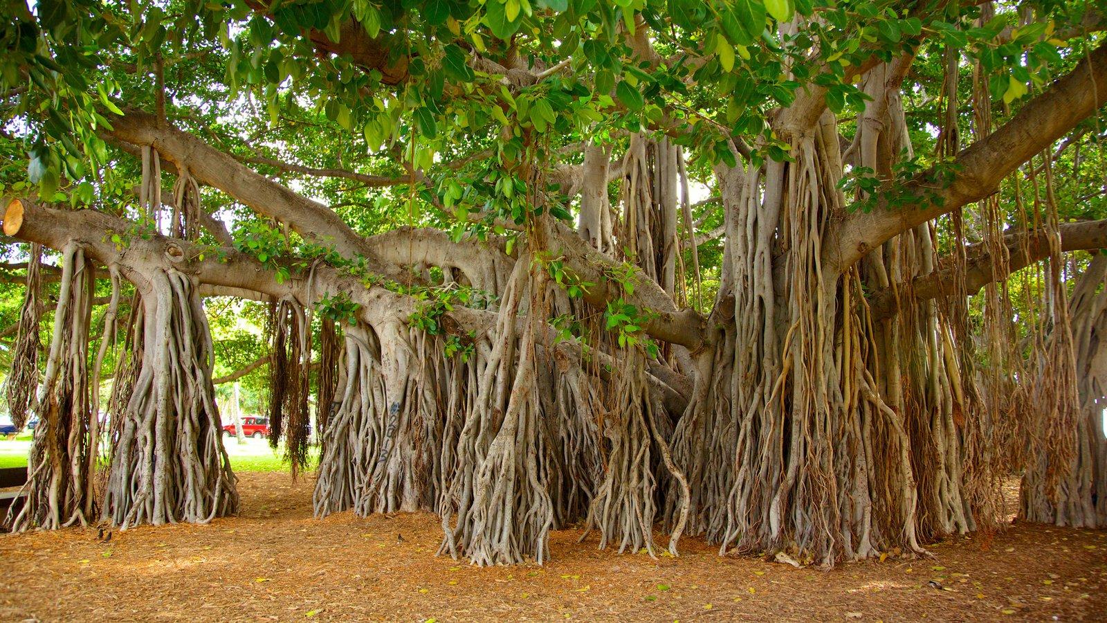 Parque Kapiolani que incluye un jardín