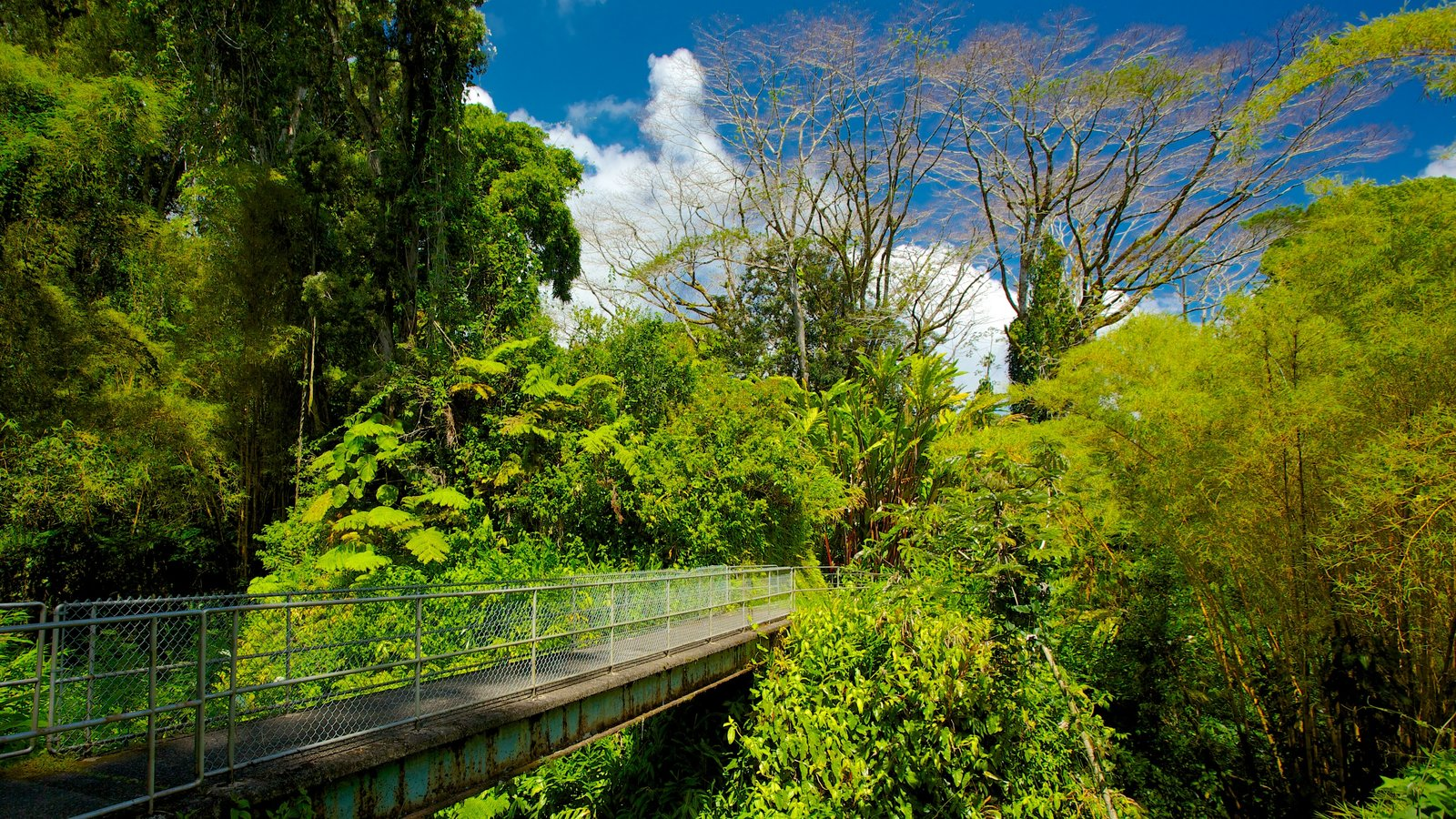 Akaka Falls showing a bridge, landscape views and forest scenes