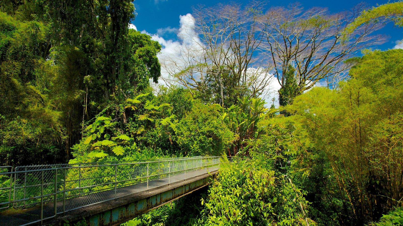 Akaka Falls mostrando bosques, un puente y vistas de paisajes