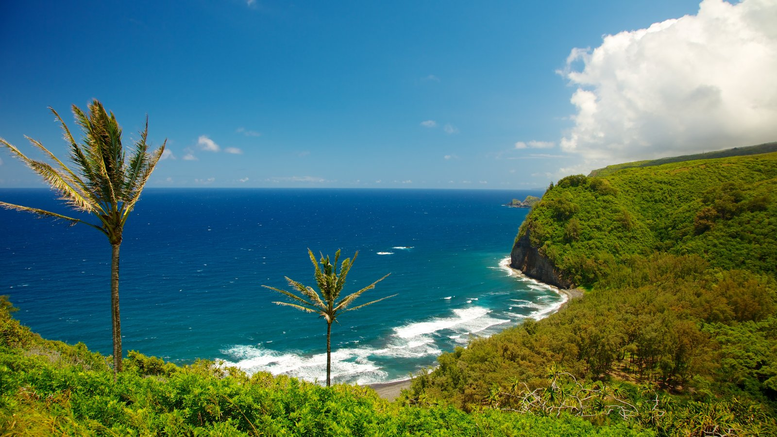 Pololu Valley Overlook featuring landscape views, general coastal views and tropical scenes