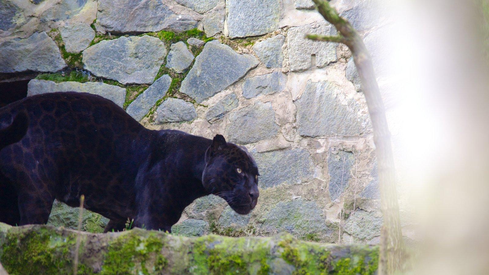 Zoológico de Edimburgo mostrando animales peligrosos y animales del zoológico