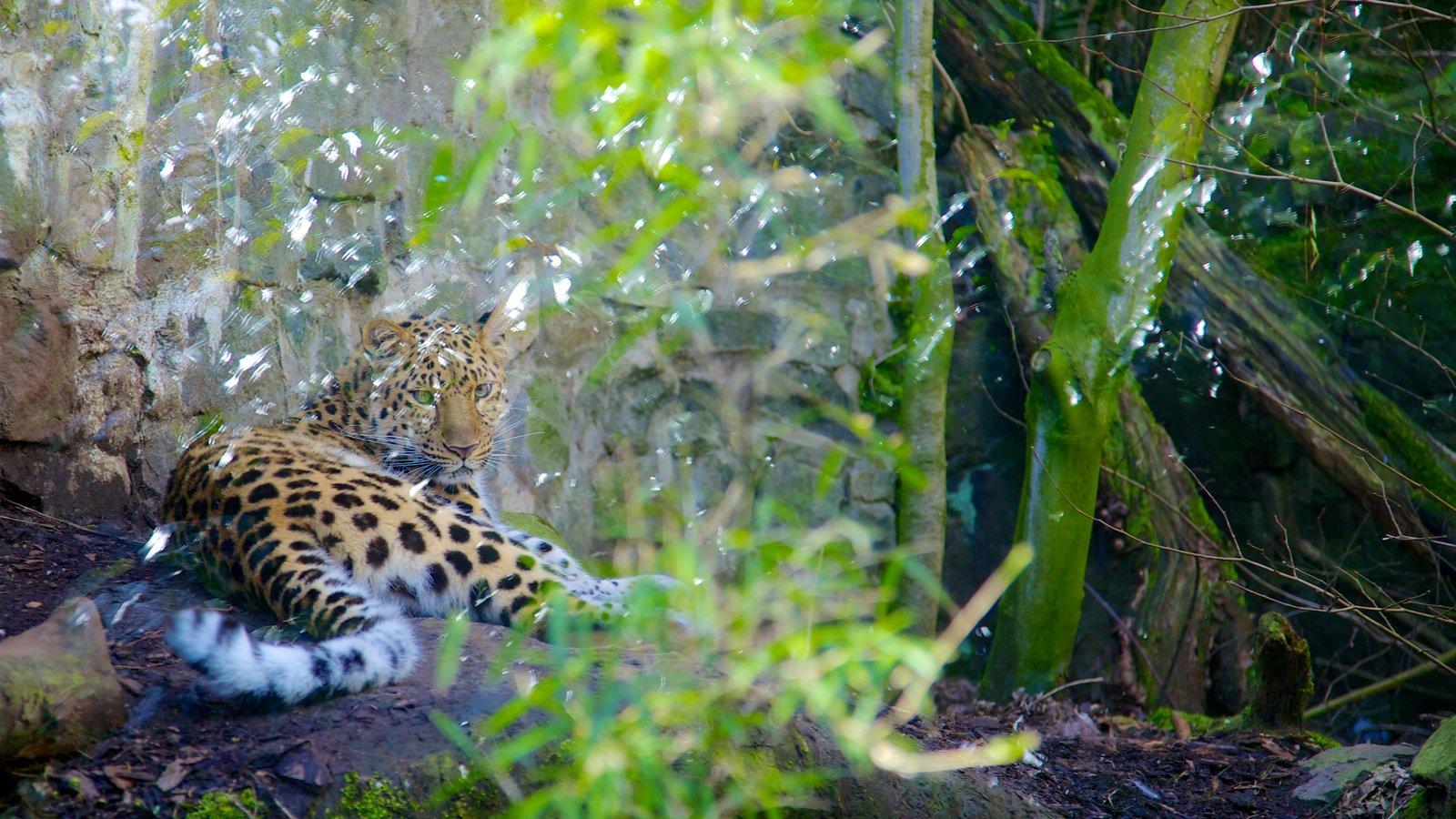 Zoológico de Edimburgo mostrando animales peligrosos, aventuras de safari y animales del zoológico