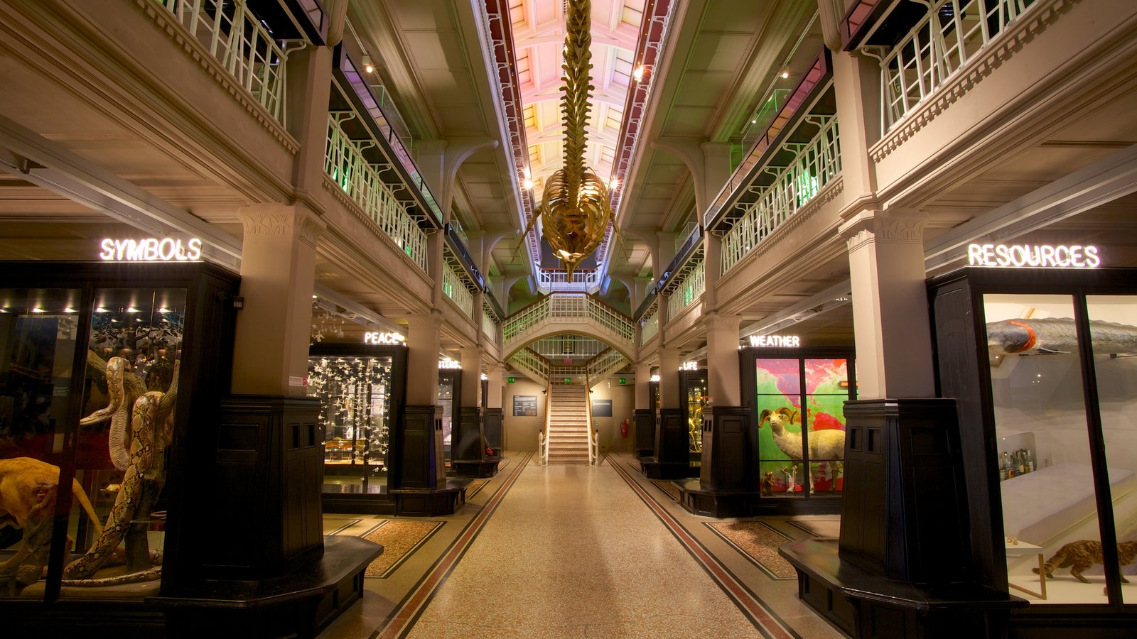 Manchester Museum showing interior views