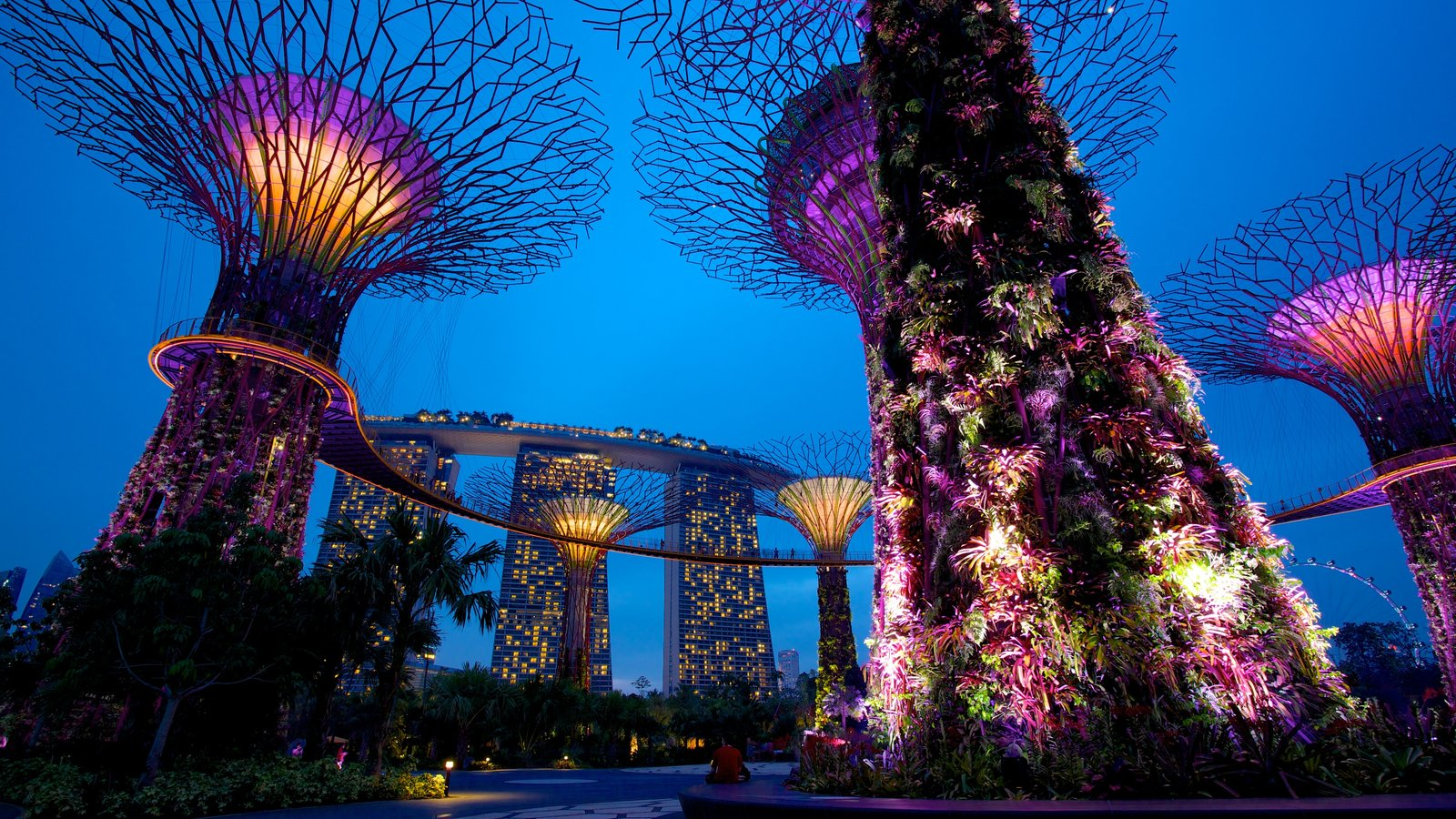 Garden By The Bay Night gardens & parks pictures: view images of gardensthe bay