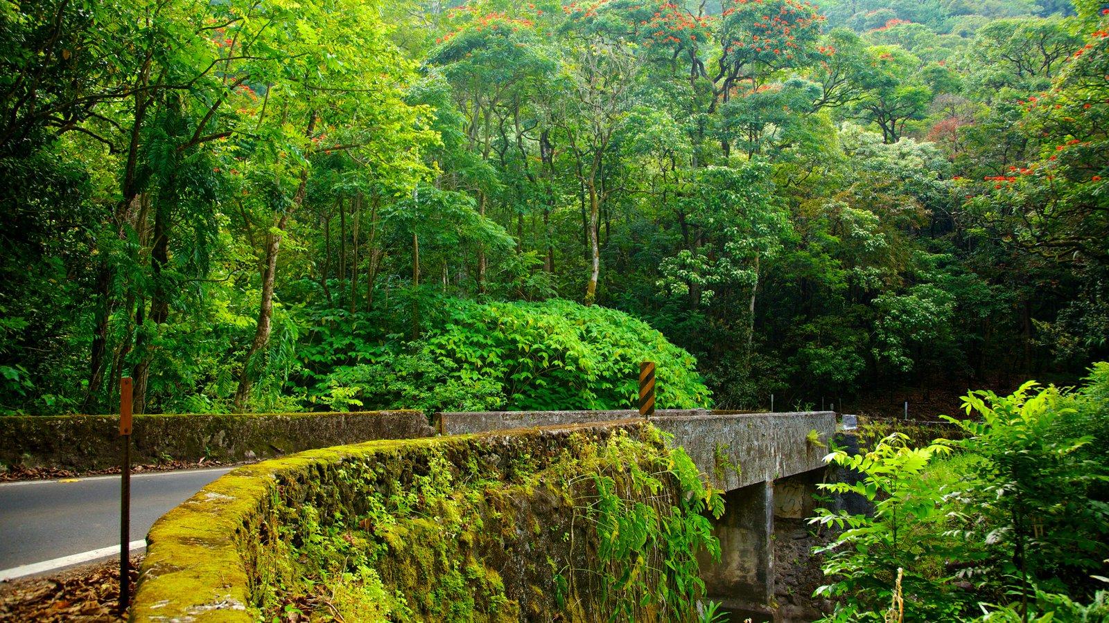 Isla de Maui que incluye vistas de paisajes, un jardín y un puente