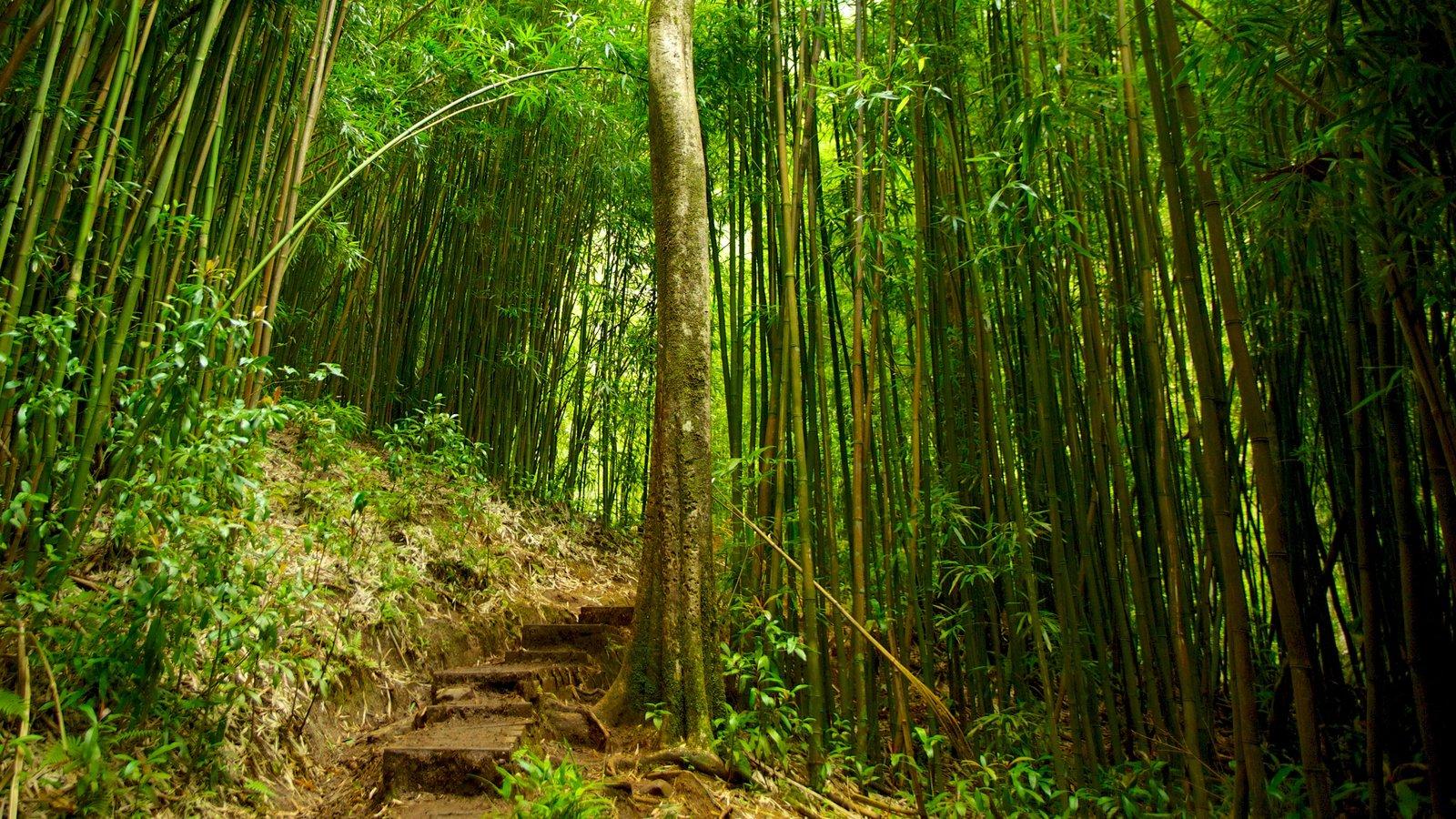 Honolulú que incluye escenas forestales, vistas de paisajes y selva