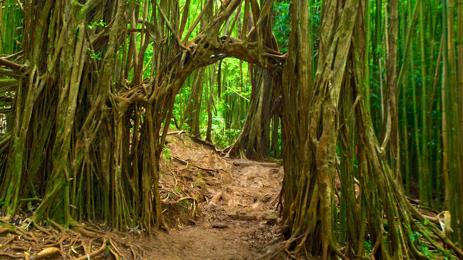 Honolulú ofreciendo selva, escenas tropicales y vistas de paisajes