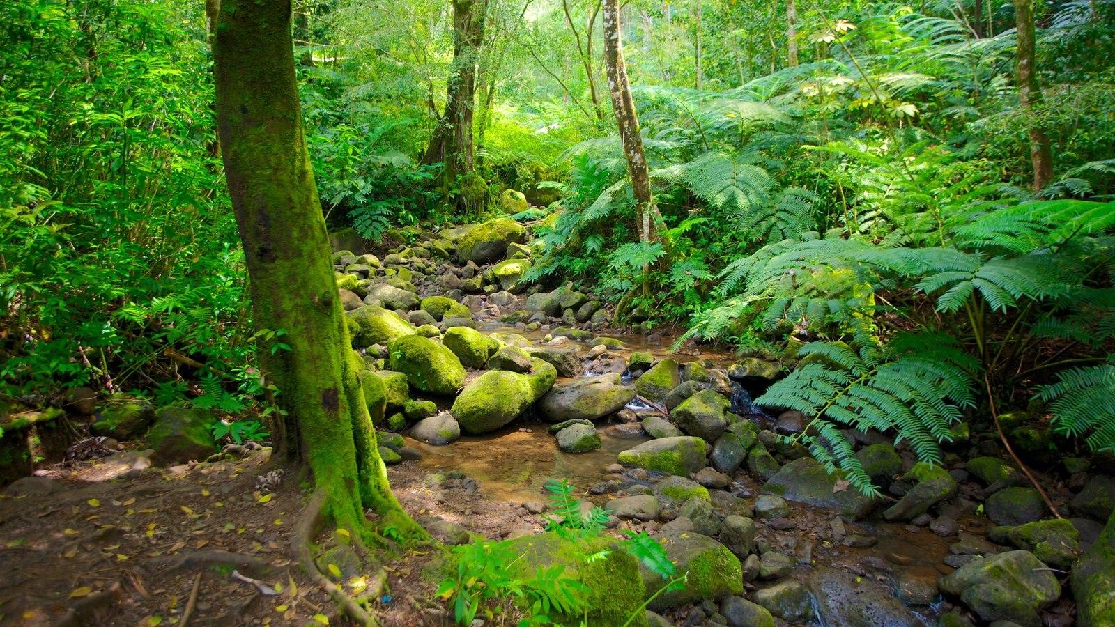 Honolulu que inclui cenas de floresta, floresta tropical e paisagem
