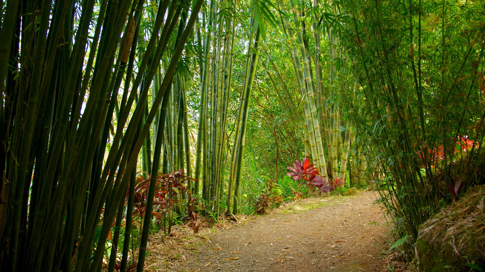 Isla de Maui ofreciendo un parque, vistas de paisajes y flores silvestres