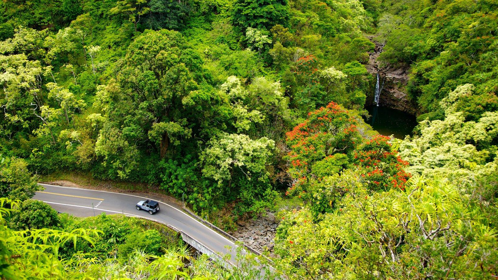 Isla de Maui mostrando flores silvestres, vistas de paisajes y escenas tranquilas