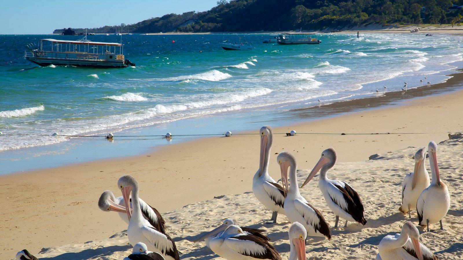 Parque nacional de Isla Moreton que incluye una playa de arena y vida de las aves