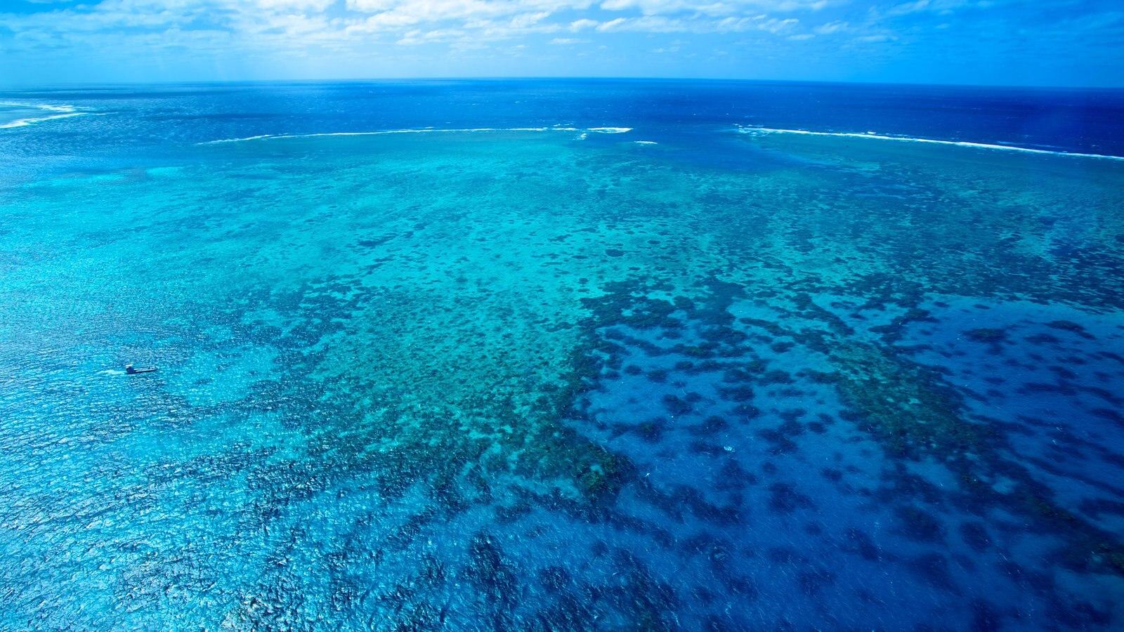 Cairns que incluye escenas tropicales, arrecifes coloridos y vistas de paisajes