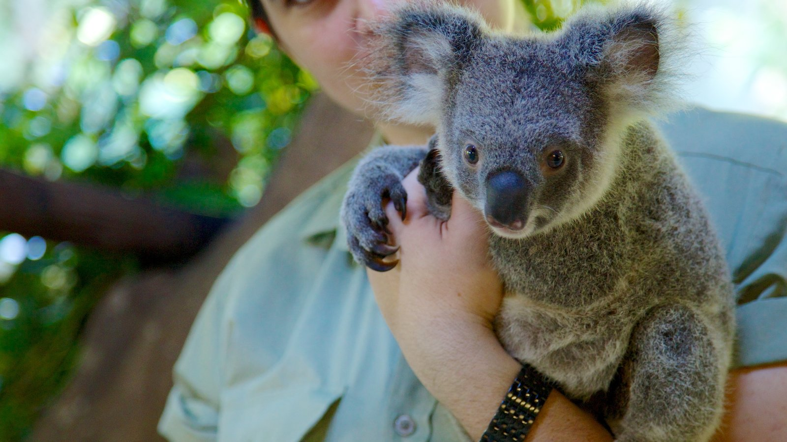 Cairns Tropical Zoo showing zoo animals and cuddly or friendly animals
