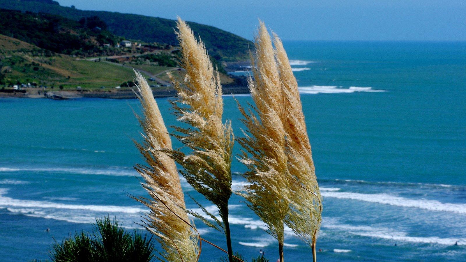 Raglan mostrando vistas generales de la costa y flores