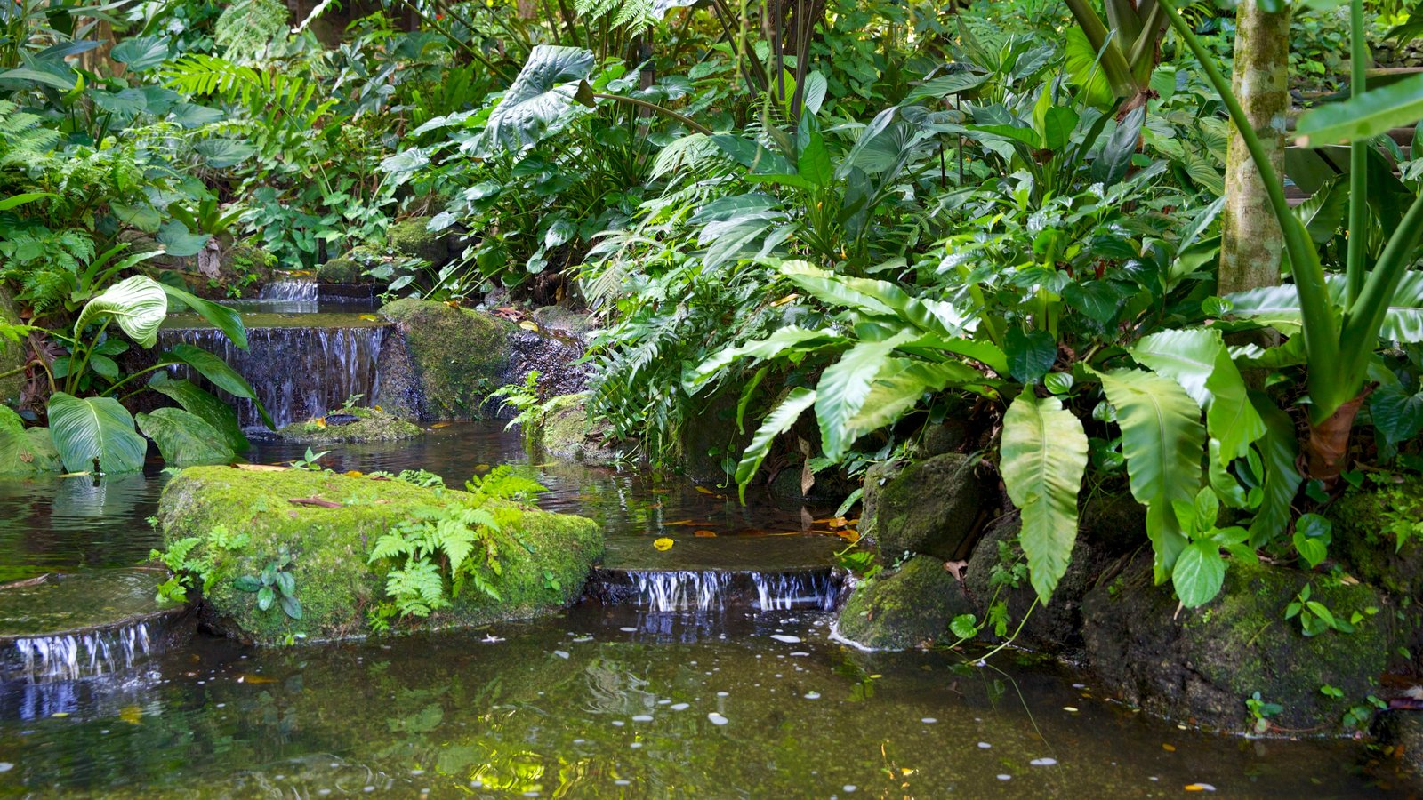 Gardens parks pictures view images of malaysia for Garden pond design malaysia