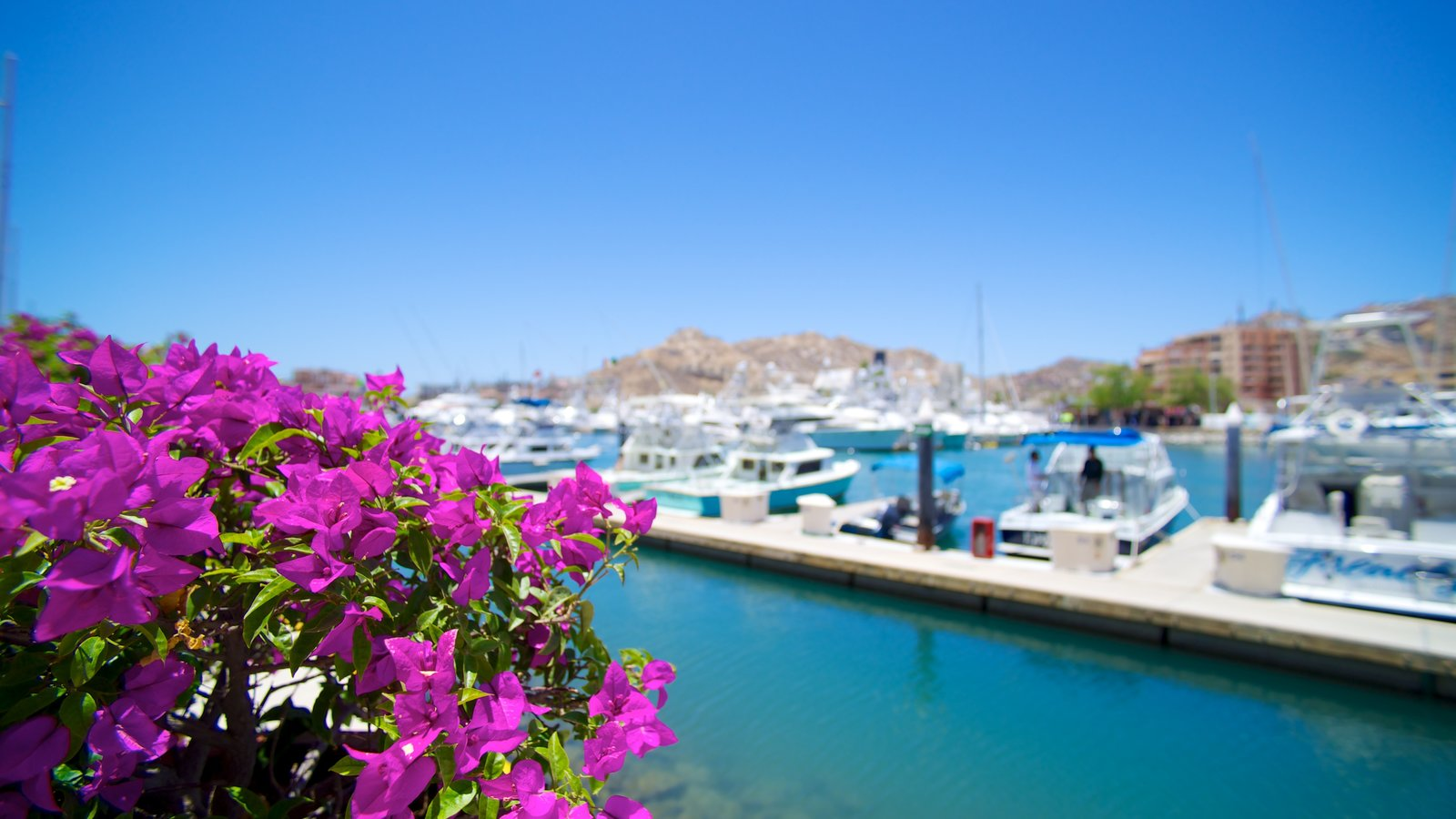 Marina Cabo San Lucas showing a marina and flowers