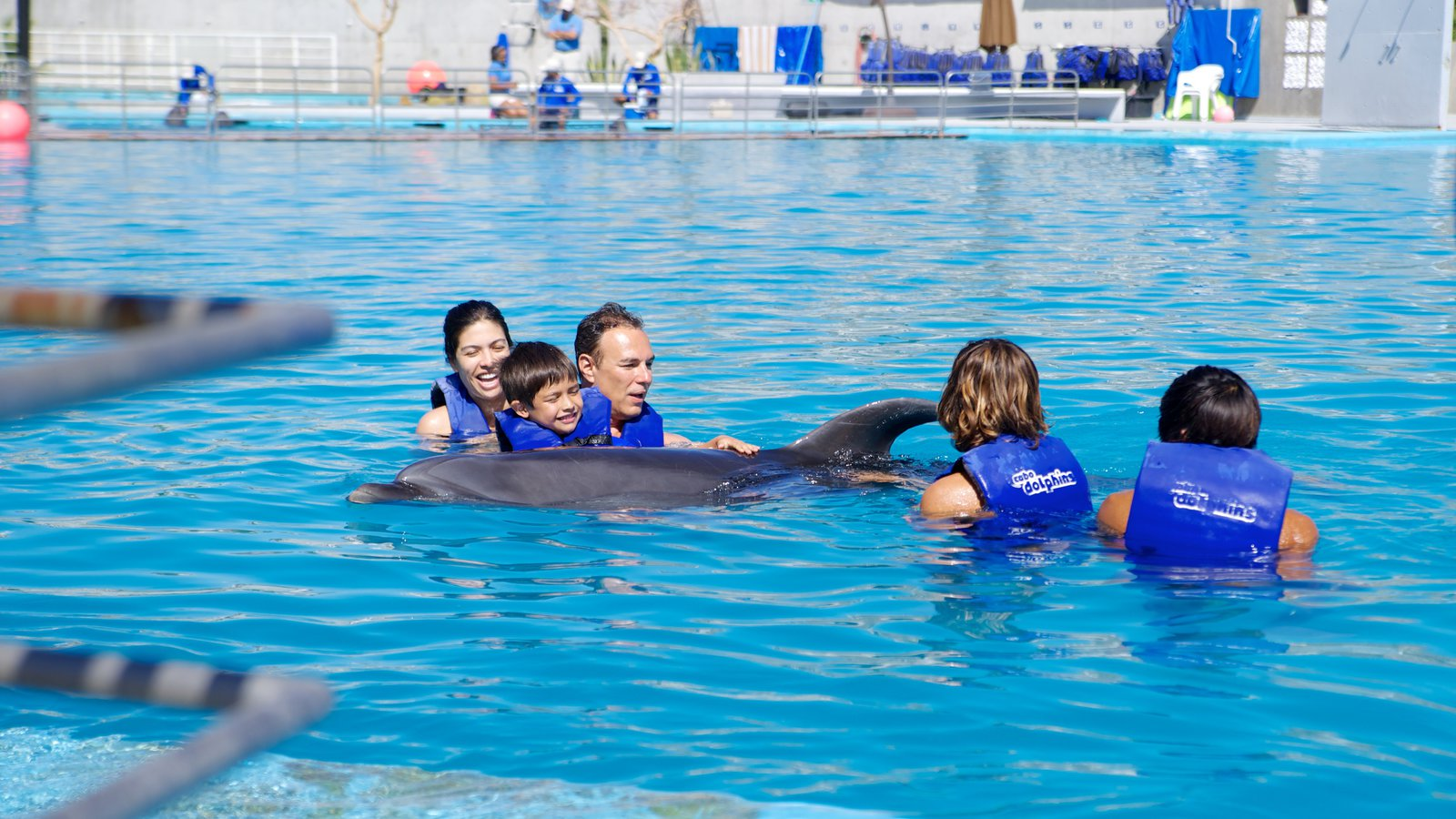 Cabo Dolphins featuring swimming, a pool and marine life