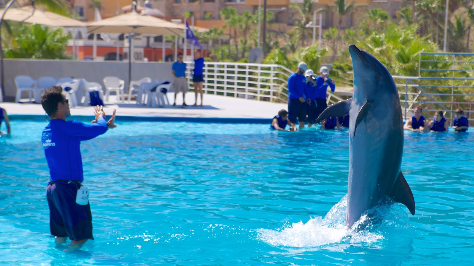 Cabo Dolphins showing marine life, performance art and a water park