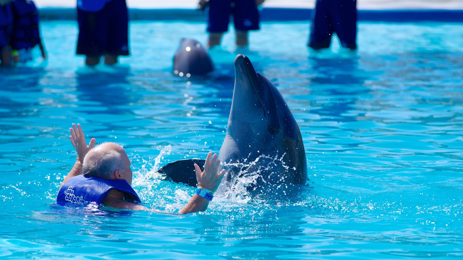 Cabo Dolphins showing a water park, swimming and marine life