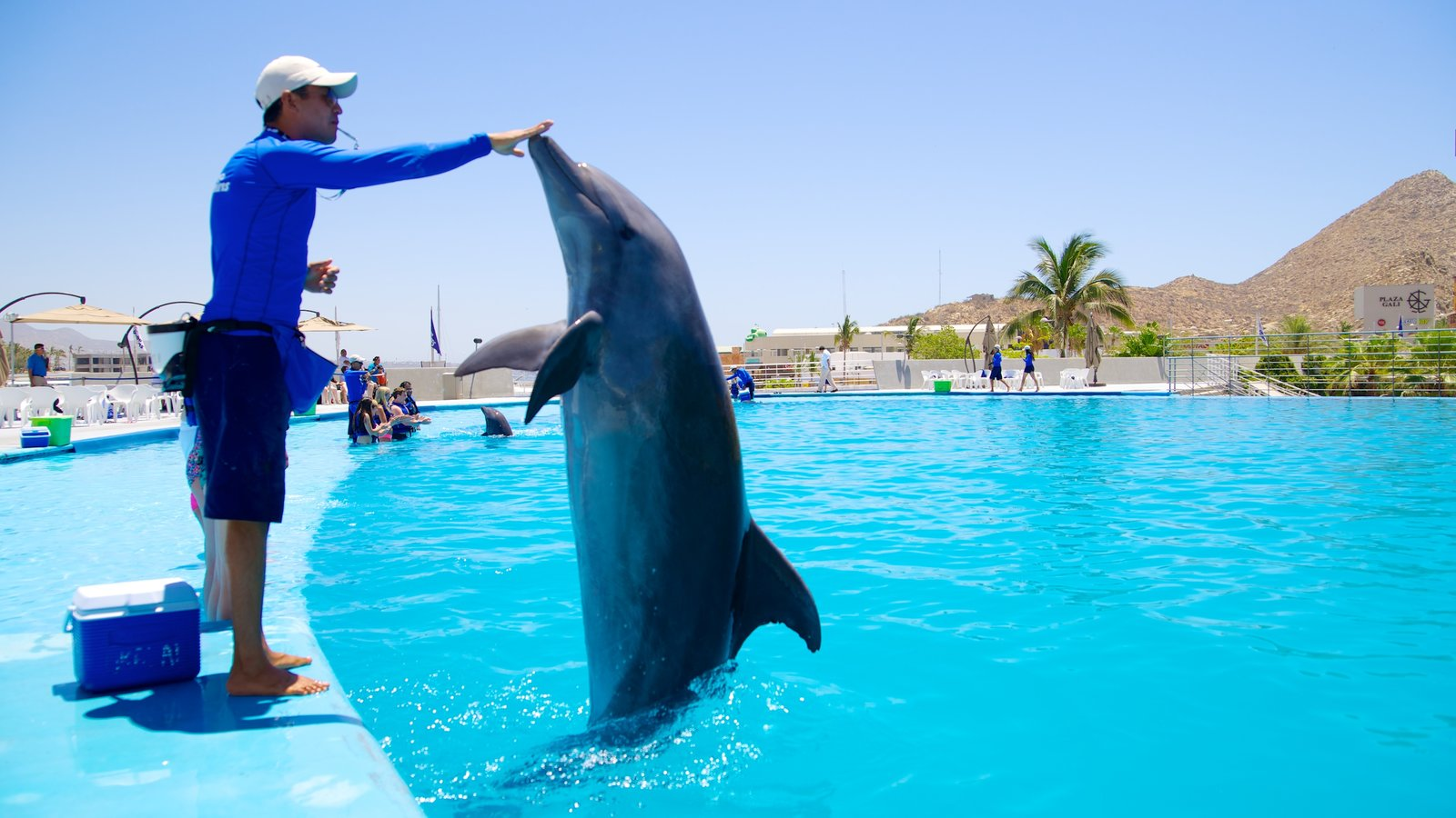 Cabo Dolphins featuring a water park, performance art and marine life