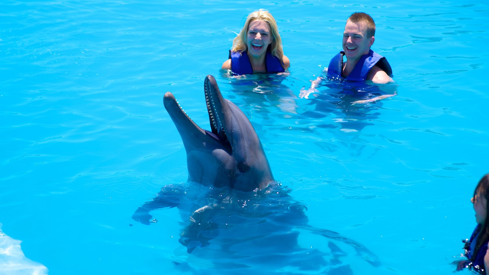 Cabo Dolphins featuring swimming, marine life and a water park