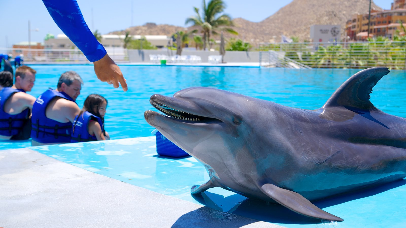Cabo Dolphins featuring a water park and marine life