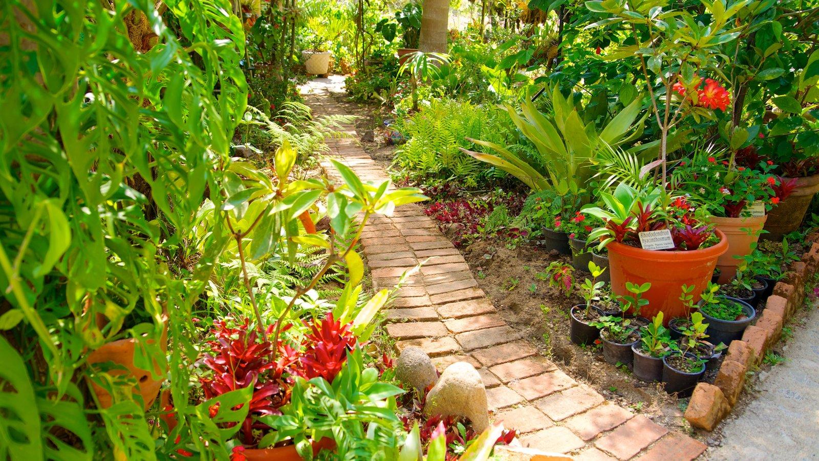 Puerto Vallarta Botanical Gardens Showing A Garden