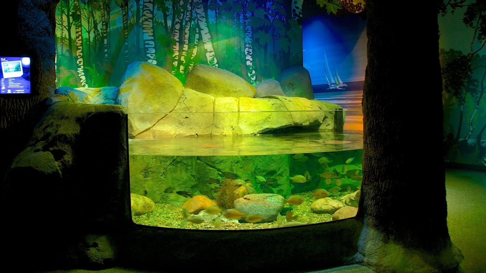 Sea Life Aquarium Missouri Pictures View Photos Images