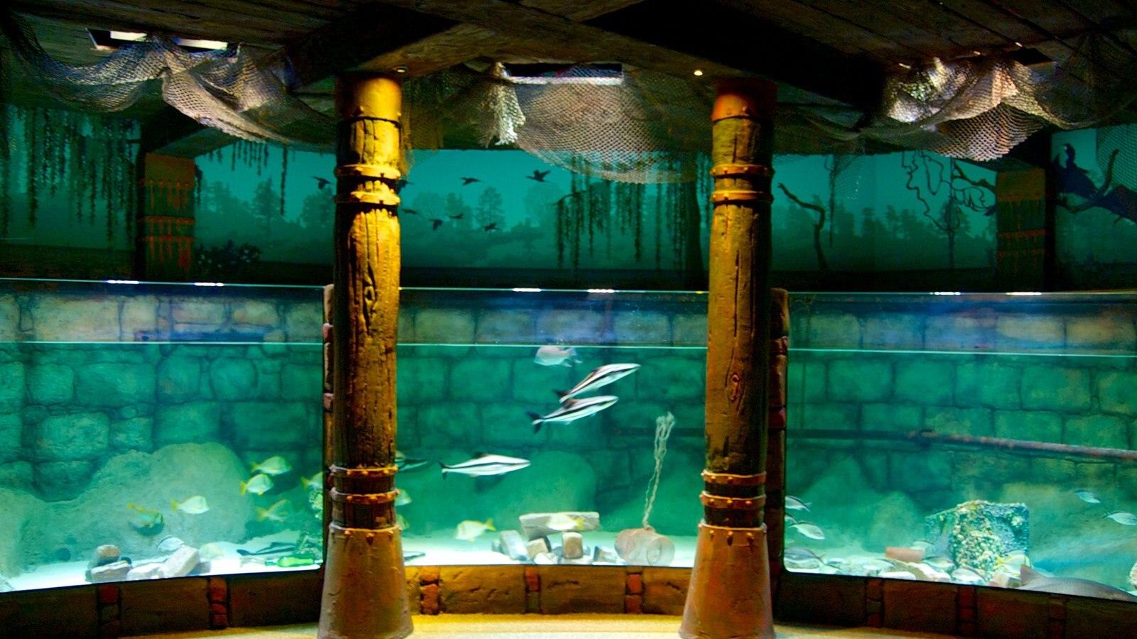 sea life aquarium missouri pictures view photos images of sea life aquarium missouri. Black Bedroom Furniture Sets. Home Design Ideas