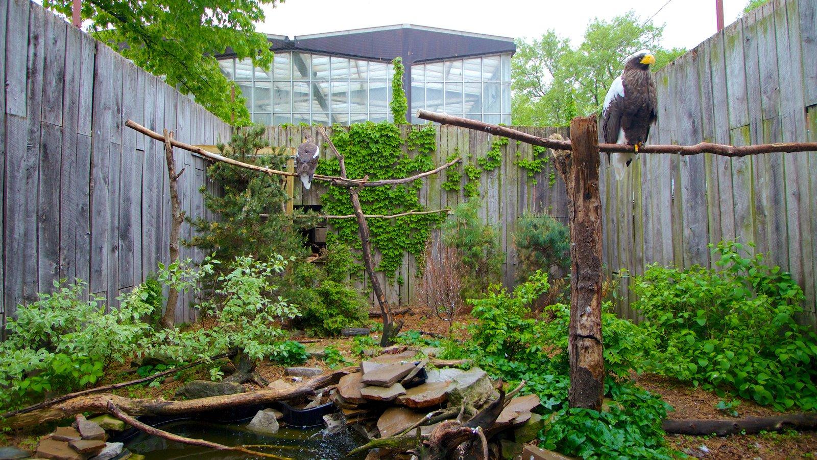 National Aviary mostrando animais de zoológico e vida das aves