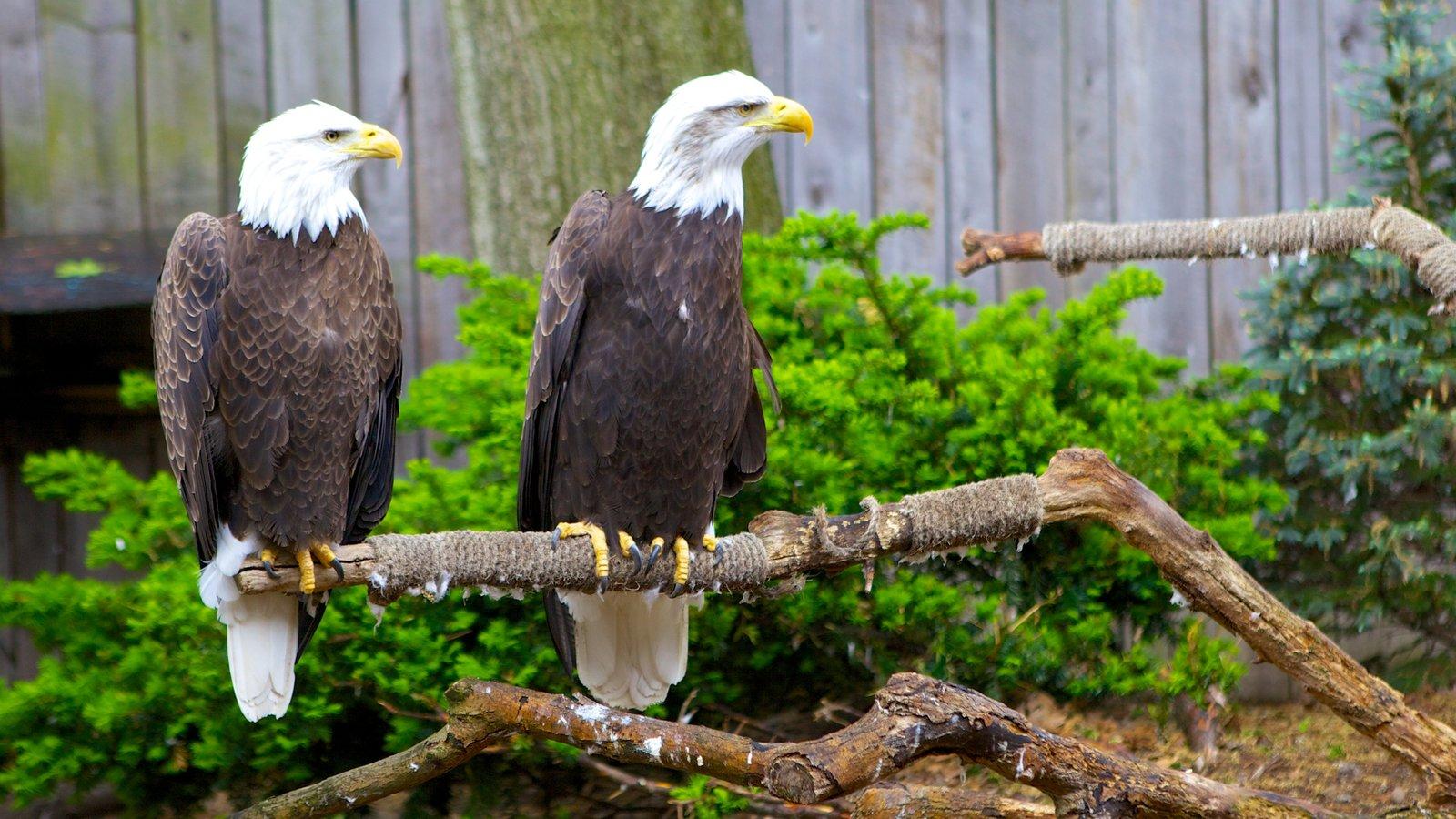 National Aviary que inclui vida das aves e animais de zoológico
