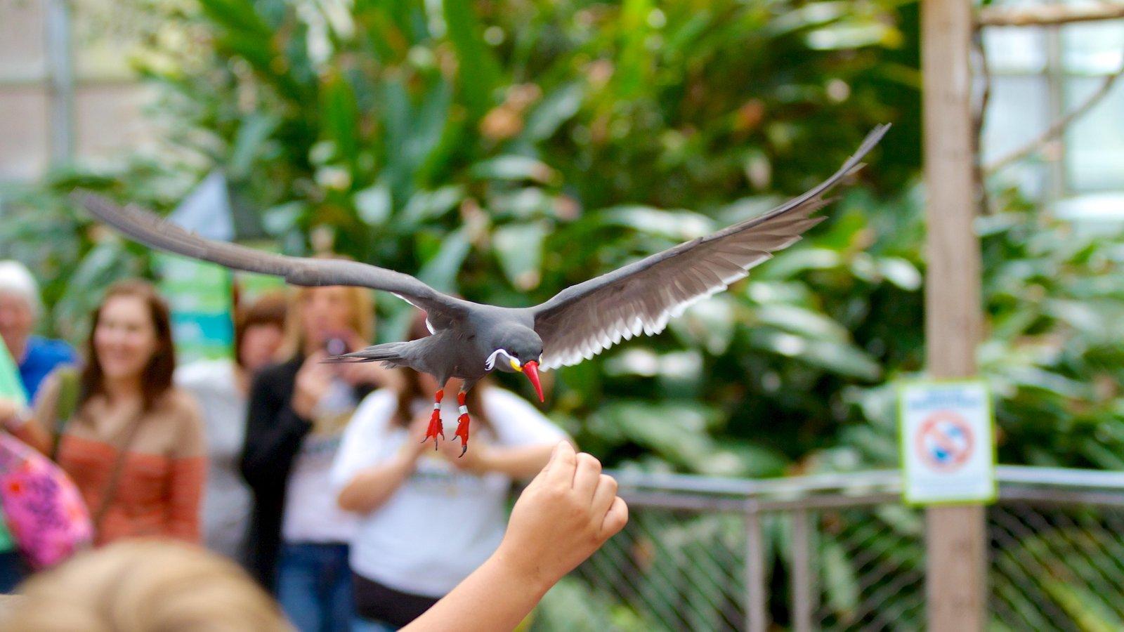 National Aviary caracterizando animais de zoológico e vida das aves