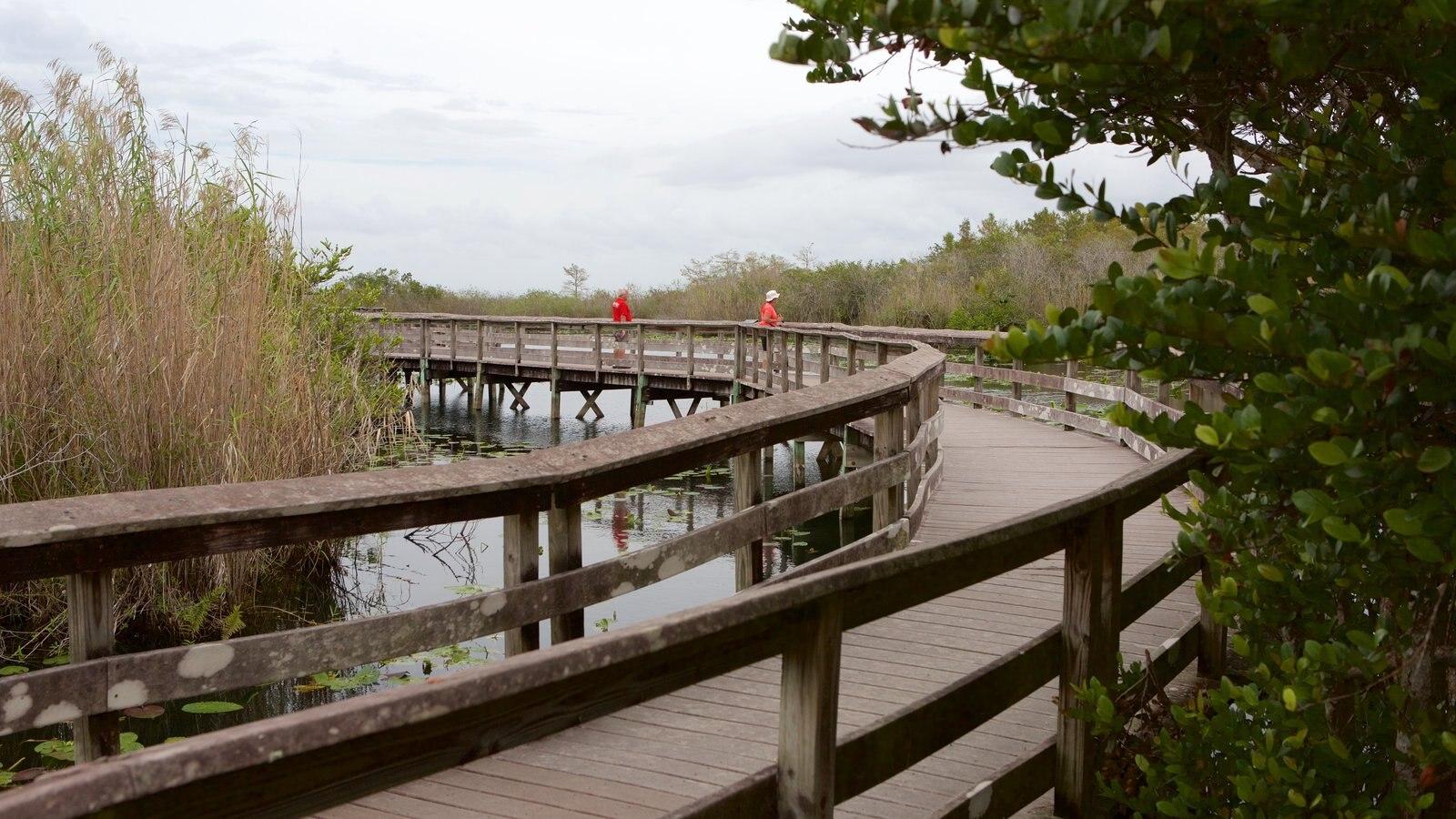 Anhinga Trail showing a bridge and wetlands