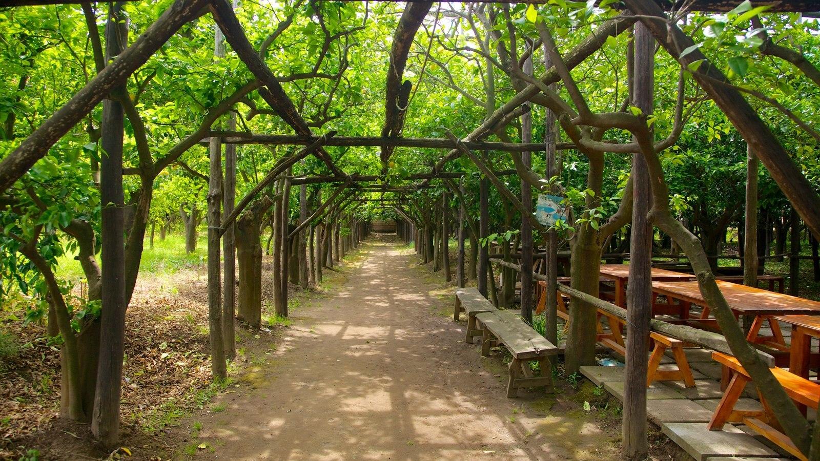 Costa de Sorrento ofreciendo un jardín