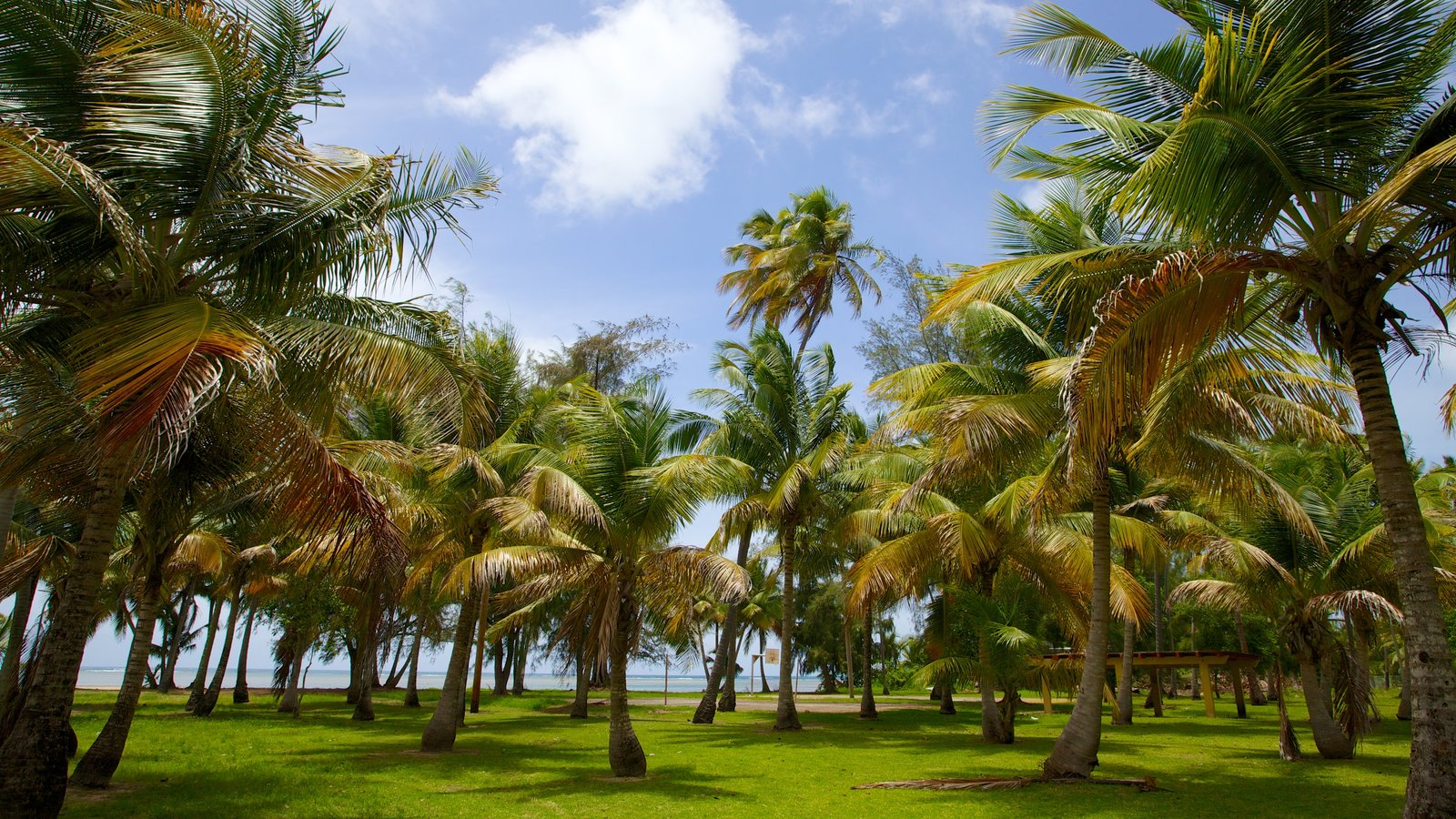 Luquillo Beach showing tropical scenes