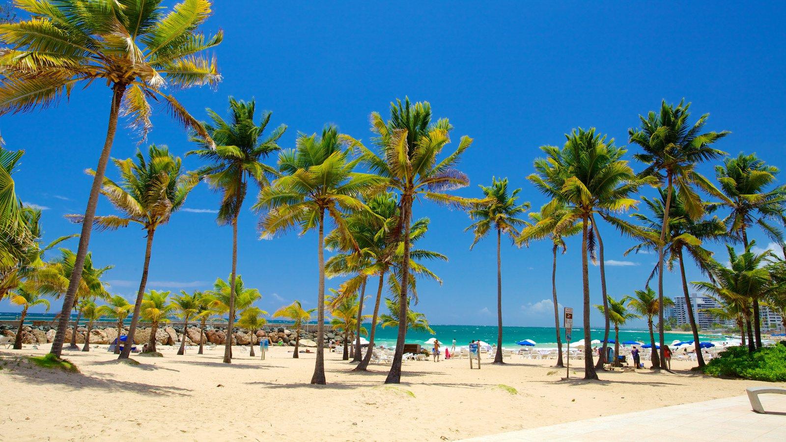 Condado Beach Showing Tropical Scenes And A Sandy