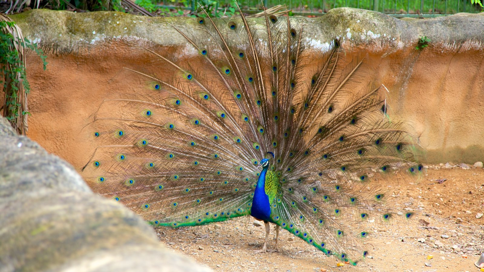 Mayaguez Zoo which includes zoo animals and bird life