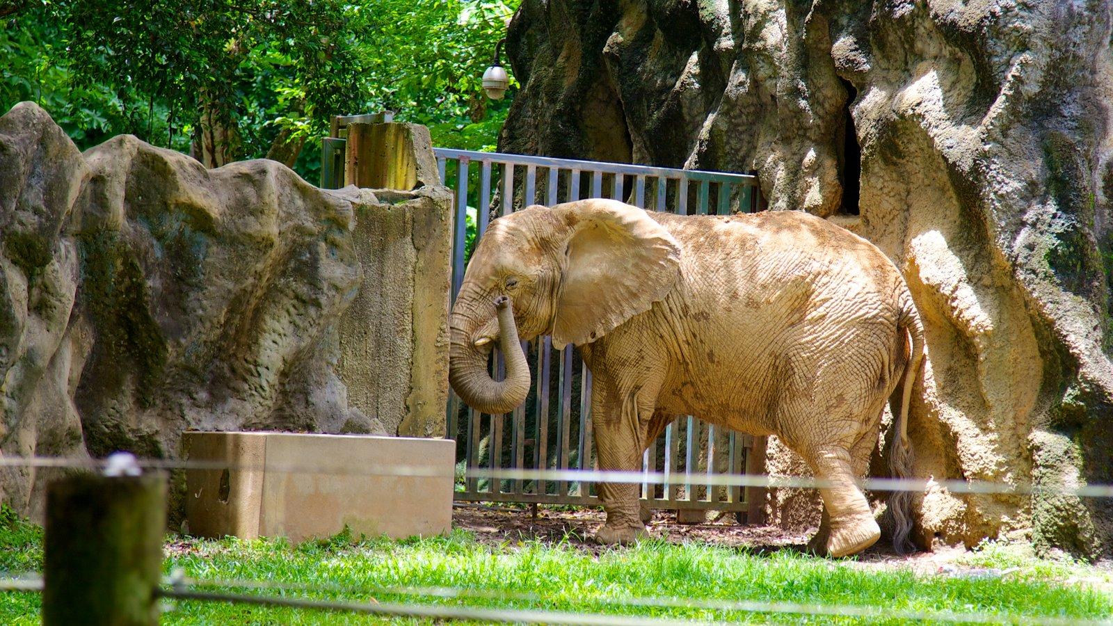 Mayaguez Zoo featuring zoo animals and land animals