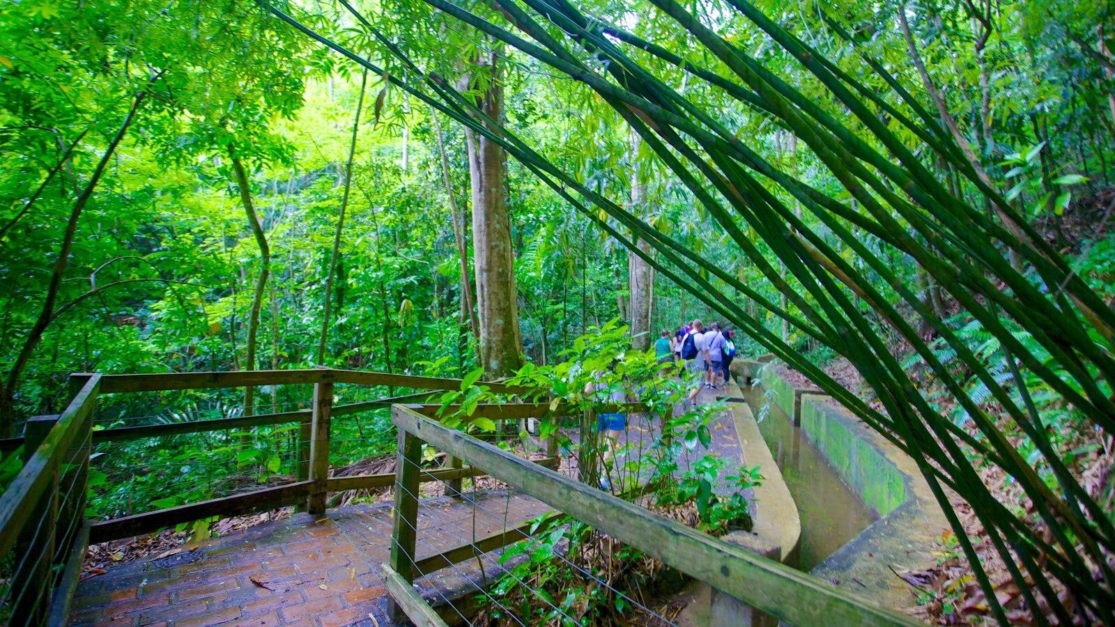 Hacienda Buena Vista featuring hiking or walking and rainforest
