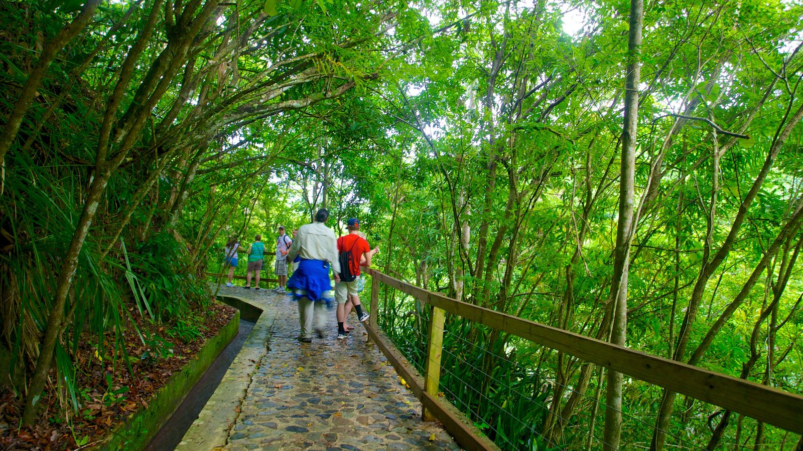 Hacienda Buena Vista which includes hiking or walking and rainforest as well as a small group of people