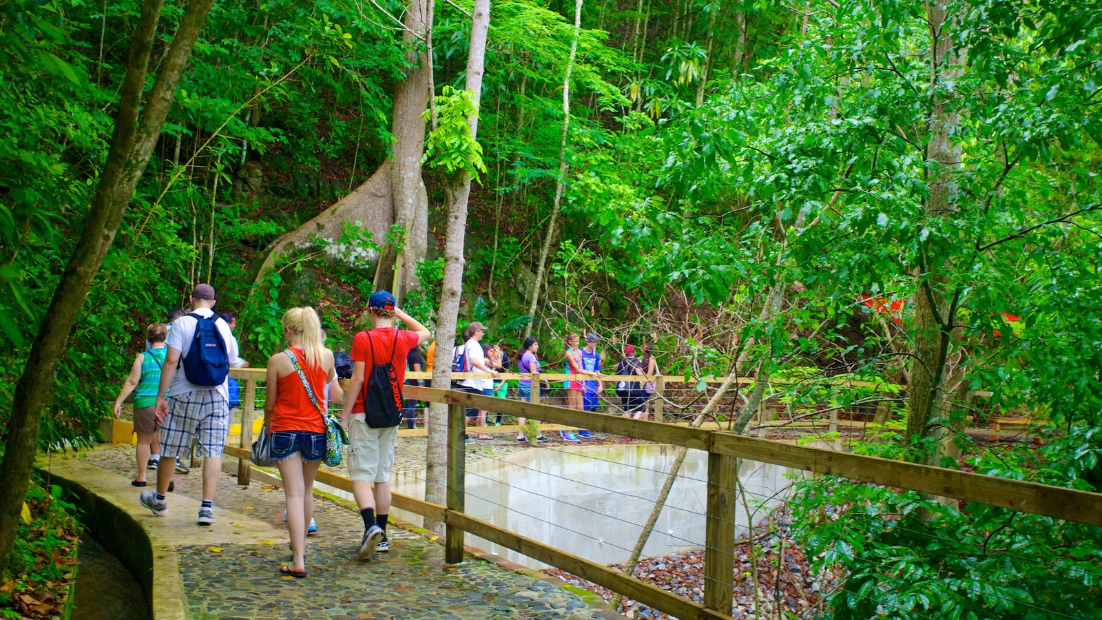 Hacienda Buena Vista showing rainforest and hiking or walking as well as a large group of people