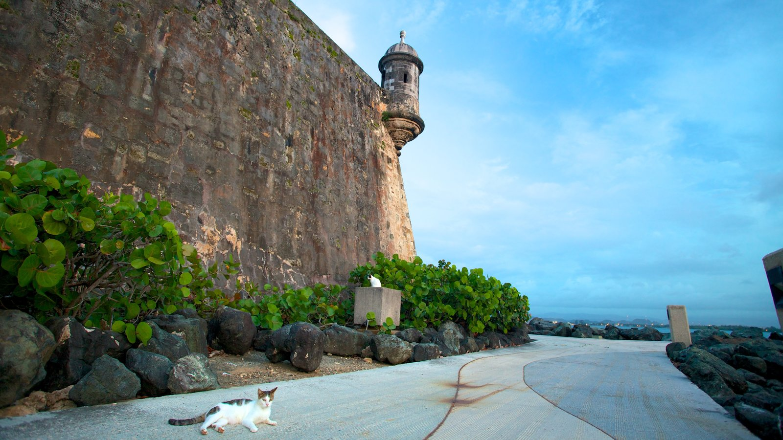 San Juan which includes cuddly or friendly animals and heritage elements